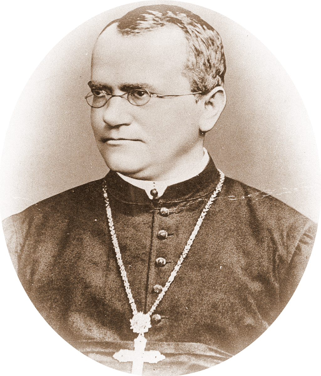 gregor mendel austrian monk Gregor mendel was an austrian monk who discovered the principles of heredity through experiments in his garden mendel's observations became the reason of modern genetics and the study of heredity he is widely considered the father of modern genetics.