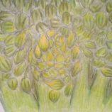 TOMČÍKOVÁ ELIŠKA, 1.B, brokolice
